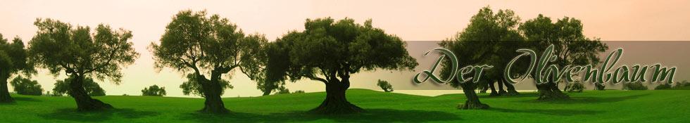 olivenbaum überwintern | Überwinterung | winterfest | winterhart, Wohnzimmer
